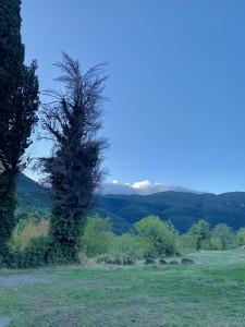 木々もみたことないような独特の形をしていて・・・。この木は小鳥たちのベッド、日が暮れるとどこからか帰ってきます