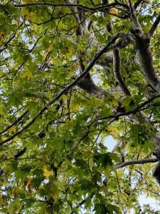 たまには大地に寝そべって、葉っぱの間から空を見上げてごらん・・・